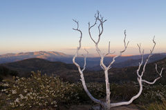 Parque de estado del desierto de Anza-Borrego, California Imagen de archivo libre de regalías