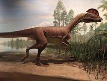 Parque de estado del dinosaurio y arboreto en Rocky Hill, Connecticut Imagen de archivo