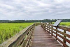 Parque de estado del Huntington Beach, Carolina del Sur, los E.E.U.U. foto de archivo