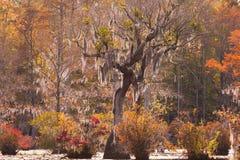 Parque de estado del NC de la alberca de molino de los comerciantes del humedal del Tupelo los E.E.U.U. fotos de archivo libres de regalías
