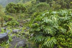Parque de estado del valle de Iao en Maui Hawaii Fotografía de archivo