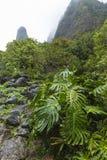 Parque de estado del valle de Iao en Maui Hawaii Foto de archivo libre de regalías