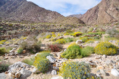 Parque de estado do deserto de Anza-Borrego, Califórnia Foto de Stock