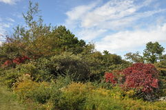 Parque de estado grande de Pocono en Pennsylvania imagen de archivo