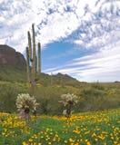 Parque de estado máximo de Picacho Foto de Stock