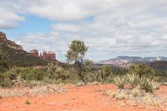 Parque de estado rojo de la roca en primavera Foto de archivo