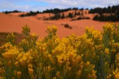 Parque de estado rosado de las dunas de arena, Utah Fotos de archivo