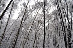 Parque de Filevsky, Moscou, Rússia após a queda de neve Árvores inclinadas sob a neve Imagem de Stock Royalty Free