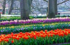 Parque de florescência da mola Imagens de Stock Royalty Free