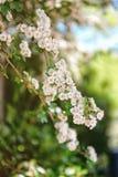 Parque de florescência Leeds Castle Kent Reino Unido das árvores imagens de stock royalty free