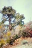 Parque de Frazier, CA Imagem de Stock