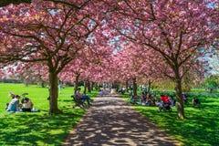 Parque de Greenwich, Londres Reino Unido Imagen de archivo