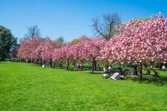 Parque de Greenwich, Londres Reino Unido Imagen de archivo libre de regalías