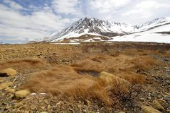 Parque de Gros Morne, Terra Nova Fotos de Stock