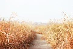 Parque de Haneul en noviembre Foto de archivo libre de regalías