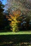 Parque de Holywells, Reino Unido, cores das folhas de outono Foto de Stock Royalty Free