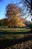 Parque de Holywells, Reino Unido, cores das folhas de outono Imagem de Stock