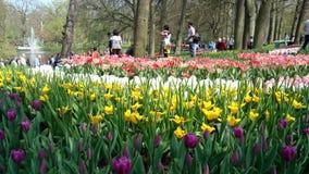 Parque de Keukenhof Amsterdam Imagen de archivo