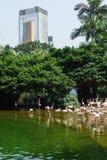 Parque de Kowloon Foto de Stock Royalty Free