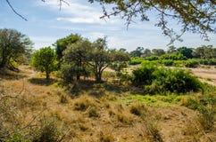 Parque de Kruger, Suráfrica Foto de archivo
