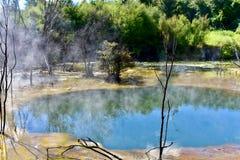 Parque de Kuirau, Rotorua fotografia de stock royalty free