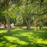 Parque de la ciudad con los árboles grandes y la hierba verde enorme Imagenes de archivo