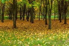 Parque de la ciudad del otoño Fotografía de archivo libre de regalías