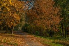 Parque de la ciudad en otoño Fotos de archivo