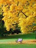 Parque de la ciudad en otoño Foto de archivo libre de regalías