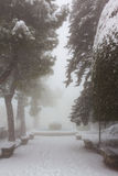 Parque de la ciudad en una nevada Imágenes de archivo libres de regalías