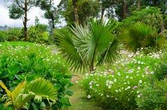 Parque de la flor Foto de archivo