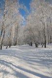 Parque de la helada de Ternopi Fotografía de archivo