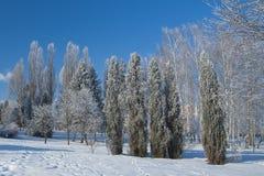 Parque de la helada de Ternopi Foto de archivo