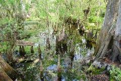 Parque de la lechuga en Tampa imagen de archivo libre de regalías