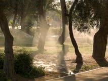 Parque de la mañana imagenes de archivo