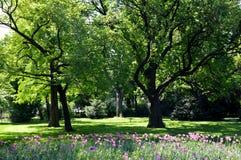 Parque de la primavera con las flores Fotos de archivo libres de regalías