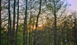 Parque de la puesta del sol foto de archivo libre de regalías