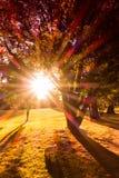 Parque de la puesta del sol del otoño Fotografía de archivo