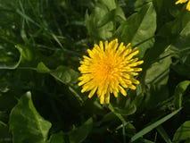 Parque de las flores Fotografía de archivo libre de regalías