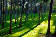 Parque de las palmeras Imagen de archivo libre de regalías