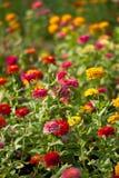 Parque de Lumphini, flores. Fotografia de Stock Royalty Free