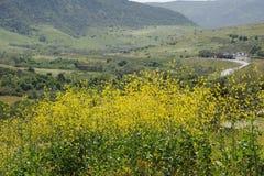 Parque de madeira da região selvagem das flores selvagens do monte do papagaio e das gargantas de Aliso, CA, EUA Imagens de Stock Royalty Free