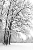 Parque de Maksimir en el invierno. Fotografía de archivo