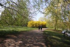 Parque 2018 de Malmo Pildamm da Suécia imagem de stock