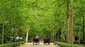 Parque de MarÃa Luisa en Séville, Espagne photos stock