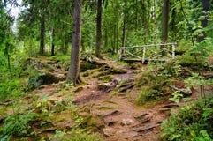 Parque de Monrepos Trayectorias de bosque Fotos de archivo libres de regalías