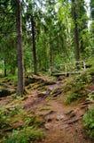 Parque de Monrepos Trayectorias de bosque Imagenes de archivo