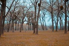 parque de naturaleza en el novi Serbia triste imagenes de archivo