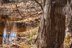Parque de naturaleza de Martin en la caída Imágenes de archivo libres de regalías