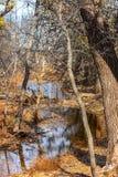 Parque de naturaleza de Martin en la caída Fotografía de archivo libre de regalías